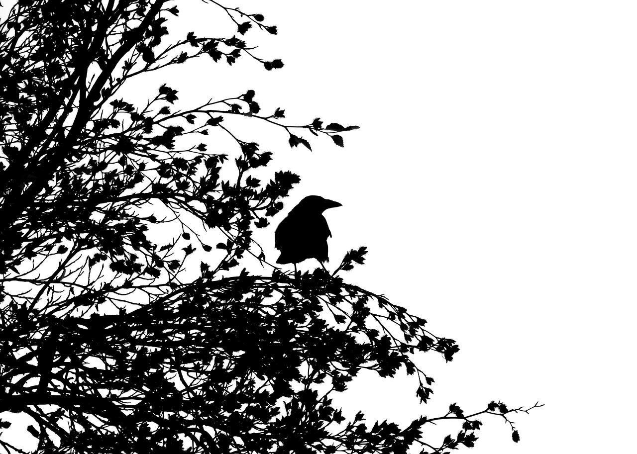 bird-1778749_1280